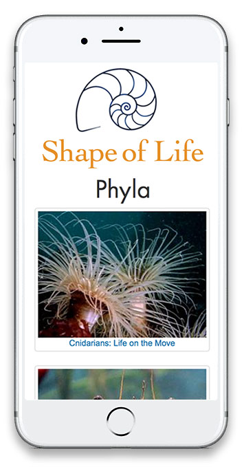 screenshot of Shape of Life mobile website