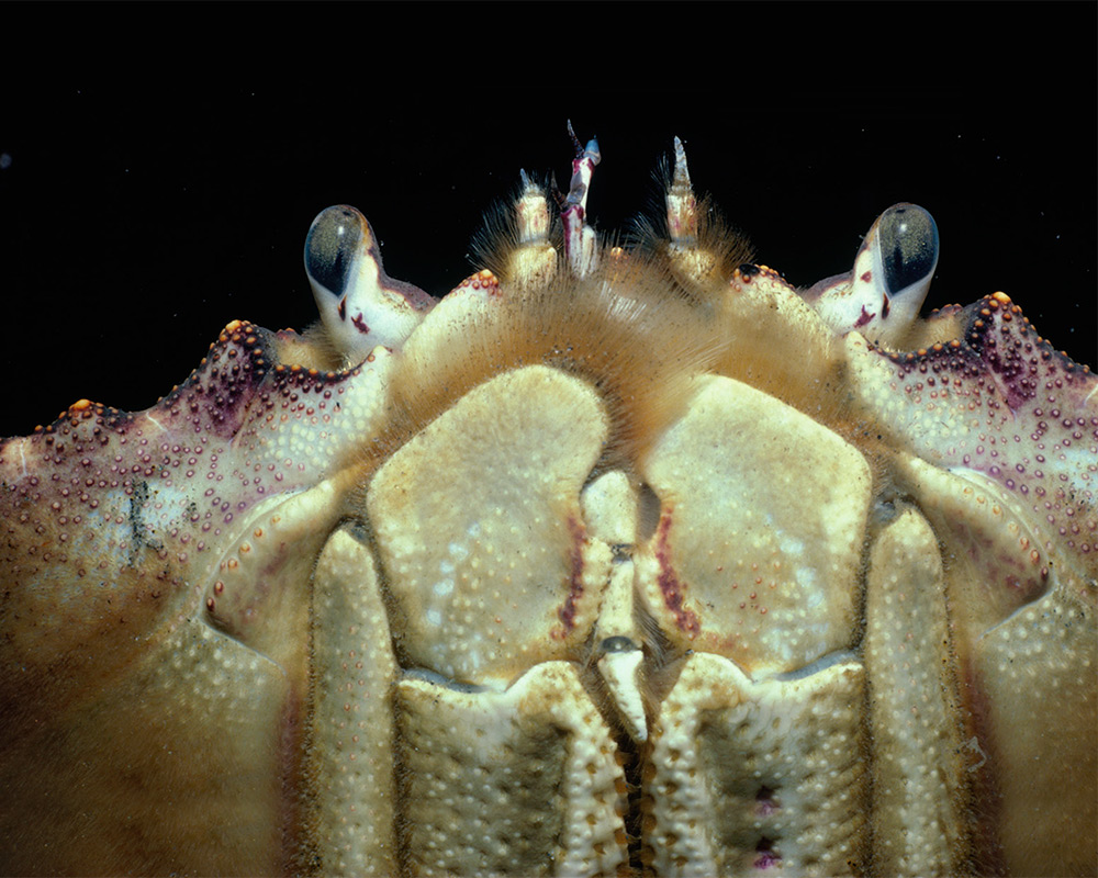 Closeup photo of crab
