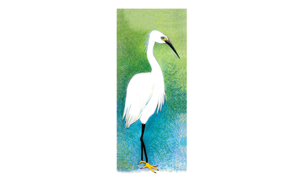 Colored pencil drawing of a snowy egret