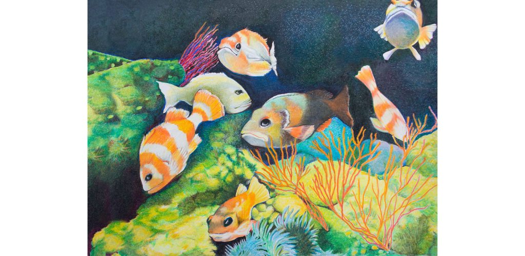 Colored pencil drawing of Fish at the Monterey Bay Aquarium