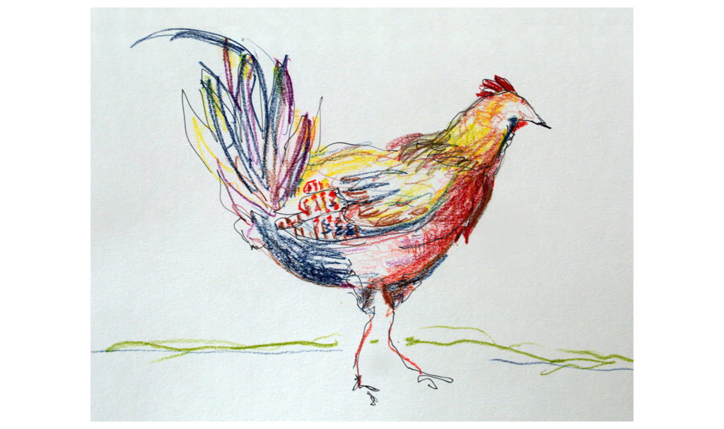 drawing in colored pencil and pen of a rooster