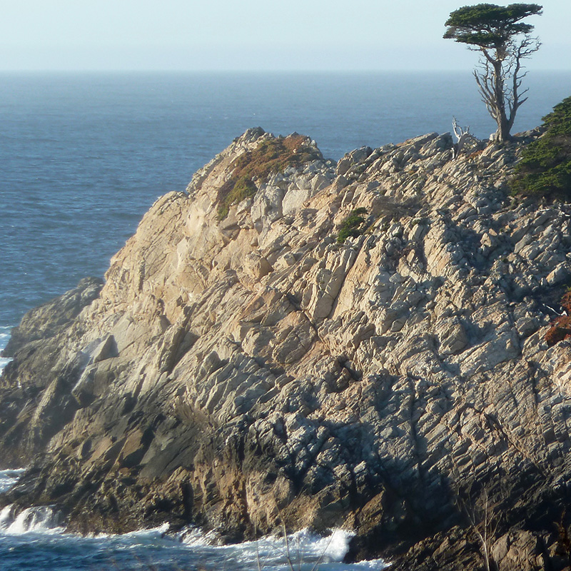 Cypress tree at Point Lobos State Natural Reserve